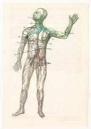 Human Anatomy Skeleton Diagram 54 Best Vintage Anatomical Images On Pinterest Vintage