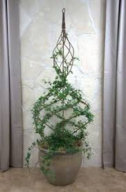 Topiaries Plants - twist and twirl english ivy around a simple wire form for a living