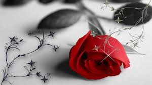 grey wallpaper with red flowers rose red flower photography grey lonely valentine hd wallpaper 3d