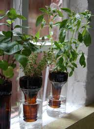 diy self watering herb garden diy self watering wine bottle herb garden off grid world