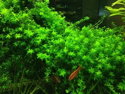 Most Beautiful Aquascapes Aquabid Com Archived Auction Liveplantsb1381355404 One Bunch