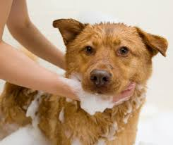 Make Bathtime Fun For Your Dog Simple Tricks To Make Dog Bathing Easier Faster And Neater