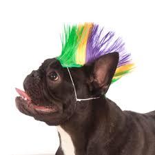 mardi gras dog collars from mohawk dog wig mardi gras mohawks mardi