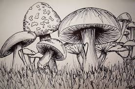 muy shrooms by anmdesigns on deviantart
