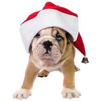 christmas gifts treats u0026 presents for dogs u0026 puppies petbliss