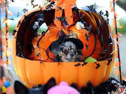 dog halloween costumes instyle com