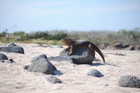 iguana island island hopping s cruz 2 islands 5d ecuador u0026 galapagos travel