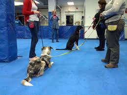 how to get dog to stop barking help my dog barks u0026 lunges at other dogs u2014 your dog u0027s friend