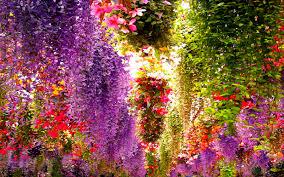 flower indoor wisteria garden blossoms wallpapers free download