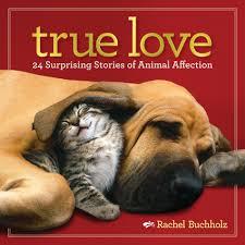 true love surprising photos of animal affection