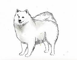 american eskimo dog london american eskimo dog art page 3 of 5 fine art america