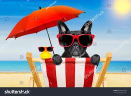 Chairs On A Beach French Bulldog Dog On Beach Chair Stock Photo 390091996 Shutterstock