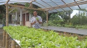 cara membuat cairan hidroponik bahan dan estimasi biaya menanam sayur sistem hidroponik di rumah kh