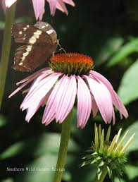 delaware native plants the importance of native plants in your garden