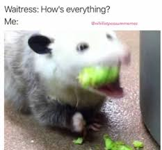 Why Me Meme - work why are you late me don t say possum memes don t say