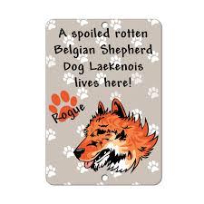 belgian sheepdog gifts spoiled rotten belgian shepherd dog laekenois dog lives here metal