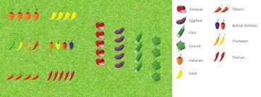 planning u0026 designing your garden pepper joe u0027s pepper joe u0027s