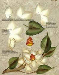 magnolia one stroke painting paintings pinterest one stroke