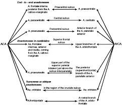 anatomy and functionality of leptomeningeal anastomoses stroke