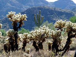 native plants of arizona list of mountain ranges of arizona wikipedia