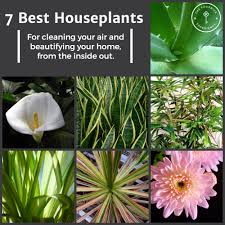 freshen up your home 7 best houseplants the fournier experience