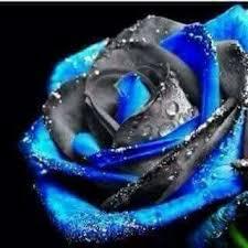 imagenes con flores azules dia de la maestra mejores 2712 imágenes de rosas henry en pinterest arreglos