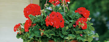Types Of Flower Gardens Types Of Annuals