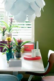 march 2017 bromeliads houseplant of the month flower council
