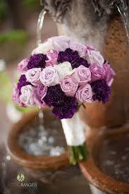 Purple Carnations The 25 Best Purple Carnations Ideas On Pinterest Purple
