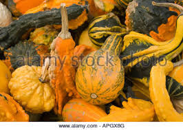ornamental gourds for sale stock photos ornamental gourds for