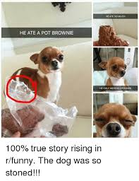 Stoned Dogs Meme - he ate a pot brownie he ate so much he only weighs 2 pounds 100