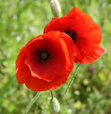 1940 u0027s style for you the inquisitive child a remembrance day poem
