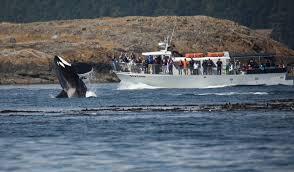 Washington Wildlife Tours images San juan island whale watching day trip from seattle wa jpg