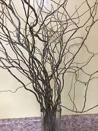 curly willow branches curly willow branches 8 bundles 80 branches ebay