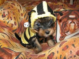 sweater bee jumper puppy sweater puppy jumper small