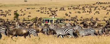 safari african safari tours mango african safaris