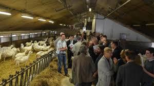 chambre d agriculture du cher l élevage caprin se porte bien en vallée du cher