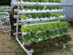 raised vegetable garden pvc best garden reference