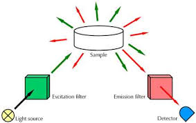 Light Independent Reactions Definition Raman Spectroscopy Electrochemical Techniques