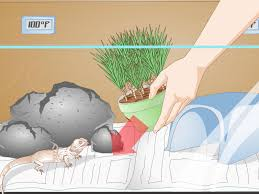 bearded dragon lighting guide how to set up a tank for bearded dragons with pictures wikihow