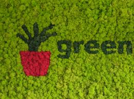 green plants office plants to buy or rent live and artificial plant displays