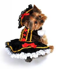 Halloween Costumes Dogs 70 Dog Costumes Images Animals Puppies