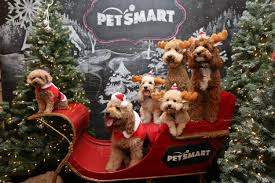 black friday 2017 petsmart 26 petsmart hacks you won u0027t want to shop without the krazy