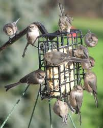 Birds In Your Backyard Oregon 2020 Counting In Your Yard