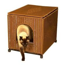 buy cat litter boxes from favourite pet store www