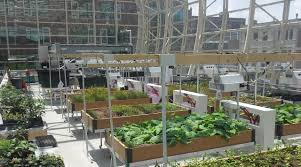 Urban Food Gardens Rooftop Hydroponic Greenhouse Google Search Greenhouse