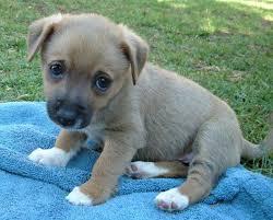Puppy Eyes Meme - puppy dog eyes imgur