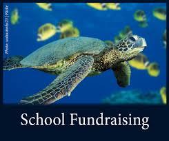 education program u2014 see turtles