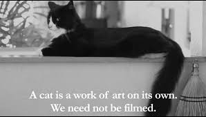 Cats In Small Spaces Video - the internet cat video festival is back u2014 and henri is out in