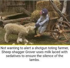 Alpaca Sheep Meme - 25 best memes about sheep shagger sheep shagger memes